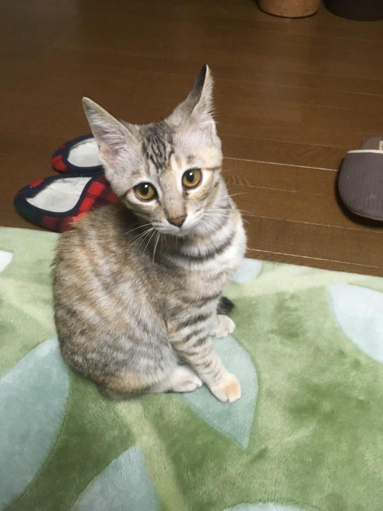 くるみちゃんの写真